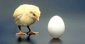 chicken-or-egg