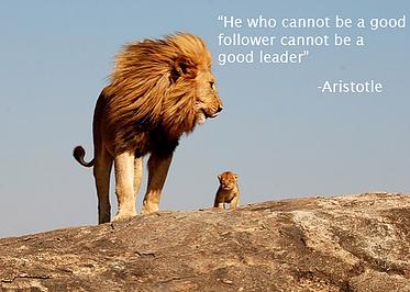 leadership_lion